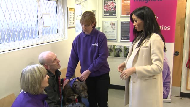 duchess of sussex visits mayhew animal home england london kensal green mayhew animal home photography*** meghan duchess of sussex into room and... - meghan duchess of sussex stock videos and b-roll footage