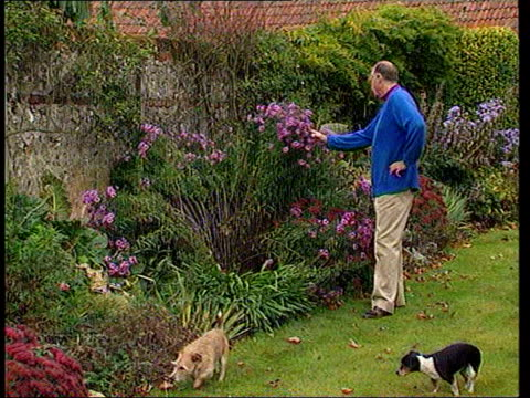 tribute to father; lib england: hampshire: dummer: ext major ron ferguson looking at flowers in garden with dogs beside - ヨーク公爵夫人点の映像素材/bロール