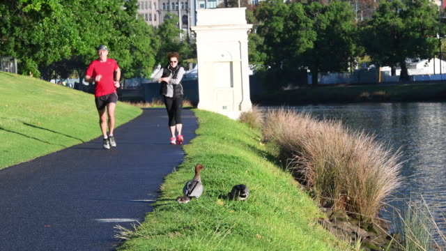 A duck family is seen as people jogging along the Yarra River in Melbourne on November 11 2016 in Melbourne Australia