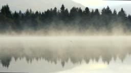 Duck swimming in lake.