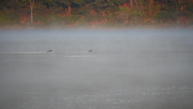 ducks and fog on walden pond, concord, massachusetts - massachusetts stock videos & royalty-free footage