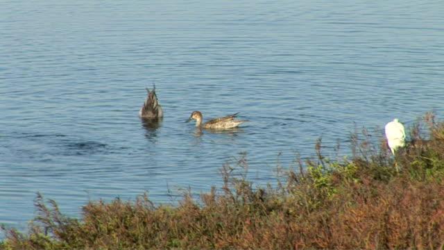 vídeos y material grabado en eventos de stock de ducks feeding - grupo pequeño de animales