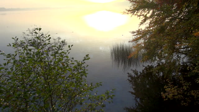 ducks float on a lake as mist rises. - bo tornvig stock videos & royalty-free footage