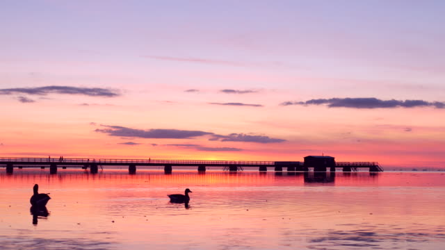 ducks in front of pier at sunset - duck stock videos & royalty-free footage
