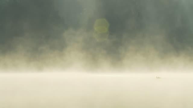 HD :アヒルの Misty 湖