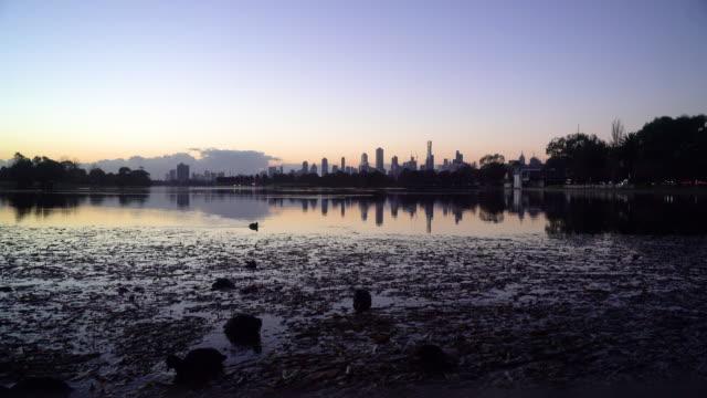 ducks on city lake - vattenfågel bildbanksvideor och videomaterial från bakom kulisserna