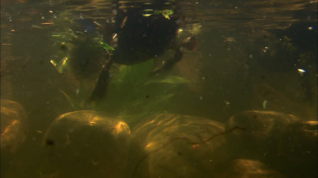 ducks paddle furiously underwater. - using a paddle stock videos & royalty-free footage