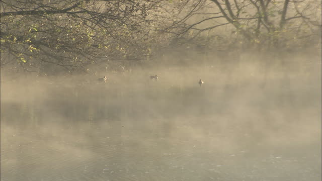 Ducks rest in a river enshrouded by drifting fog.