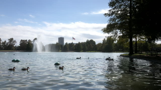 ducks swimming in the lake in hermann park with american flag in the background, texas, usa - southwest usa stock-videos und b-roll-filmmaterial