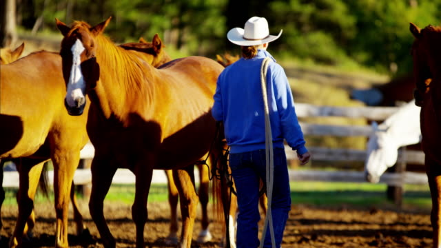 Dude Ranch Cowboys tending horses before riding Canada