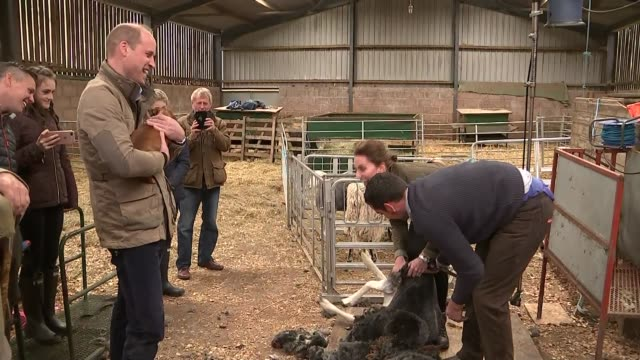duke and duchess of cambridge meet sheep farmers in cumbria; england: cumbria: patterdale: deepdale hall farm: int **no/minimal sound output**... - sheep shearing stock videos & royalty-free footage