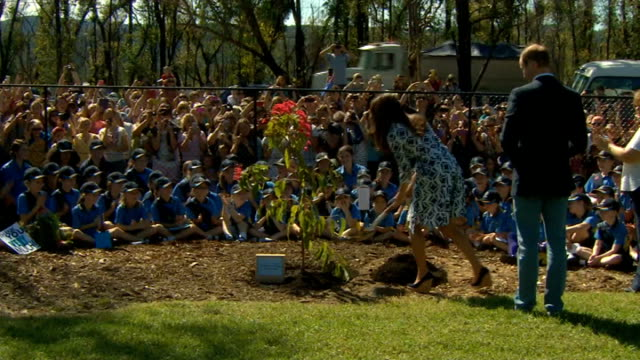 duke and duchess of cambridge visit blue mountains catherine duchess of cambridge cheered by girl guides as she shovels earth to plant red eucalyptus... - visit stock videos & royalty-free footage