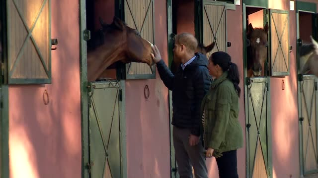duke and duchess of sussex visit federation of equestrian sports; morocco: rabat: moroccan federation of equestrian sports: ext gvs prince harry,... - britisches königshaus stock-videos und b-roll-filmmaterial