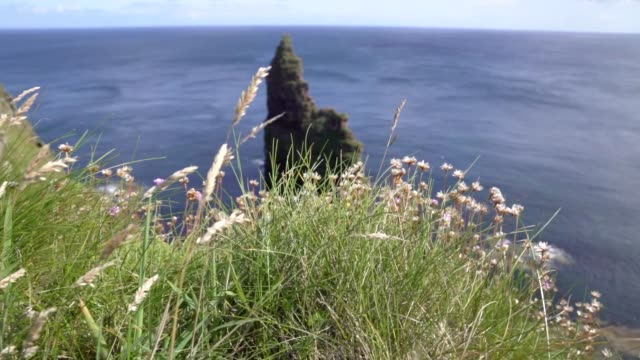 duncasby head in scotland - scottish highlands stock videos & royalty-free footage