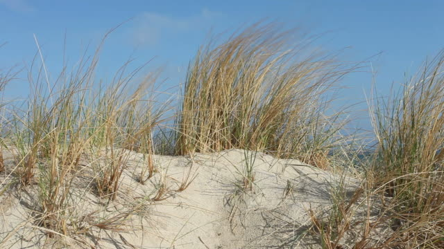 dune grass at coast in wind - sand dune stock videos & royalty-free footage