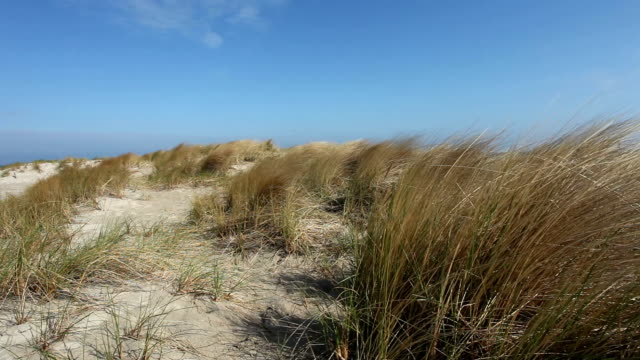 dune grass at coast in wind - north frisian islands stock videos & royalty-free footage