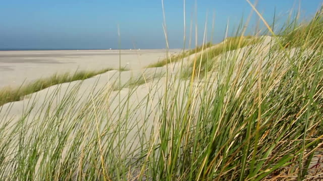 dune grass at coast, move to the left - north sea stock videos & royalty-free footage