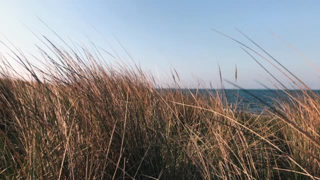 dune grass on the beach - denmark stock videos & royalty-free footage