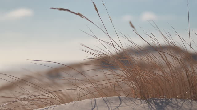 dune grass on the beach - sand dune stock videos & royalty-free footage