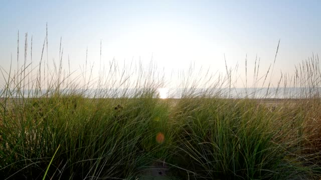 dune grass with beach and and sun, punta sabbioni, venice, venetian lagoon, mediterranean sea, veneto, italy - sea grass plant video stock e b–roll