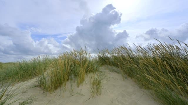 dune landscape in the summer, romo, röm, tonder kommune, syddanmark, southern denmark, denmark - kommune stock-videos und b-roll-filmmaterial