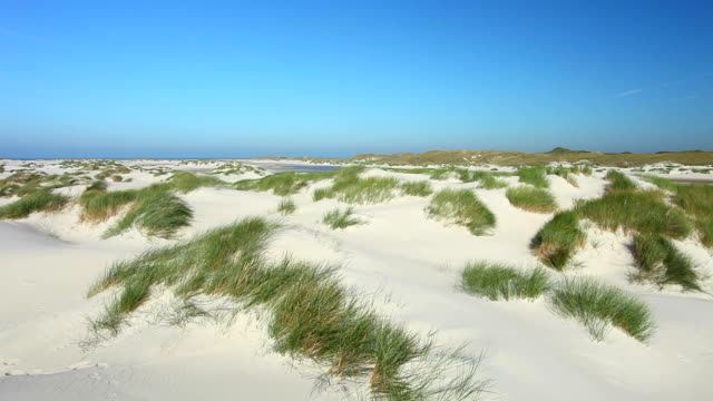 Dune Landschaft von Amrum in Deutschland