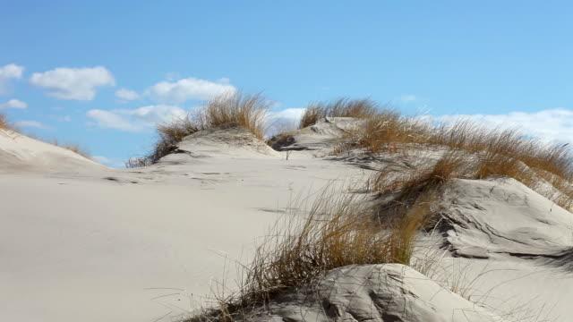 Dune Landscape