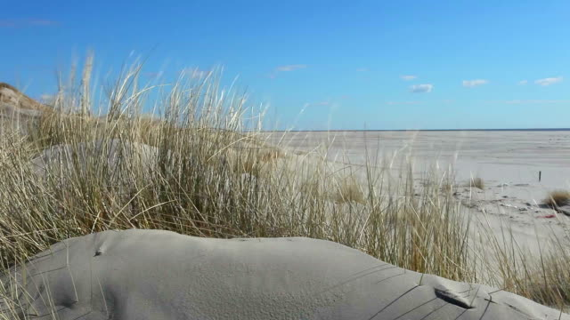 dune landscape - marram grass stock videos & royalty-free footage