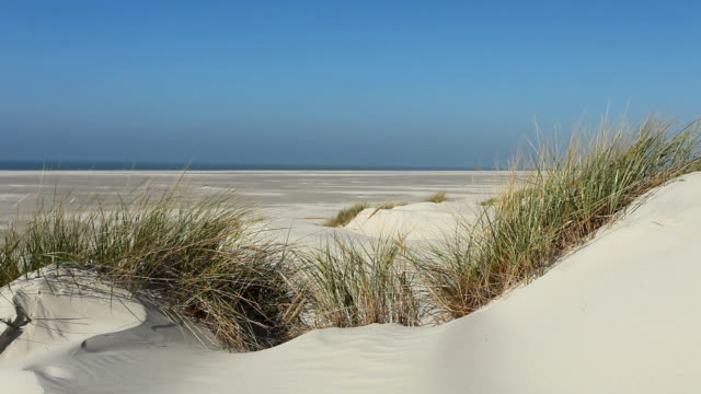 dune landscape - north sea stock videos & royalty-free footage