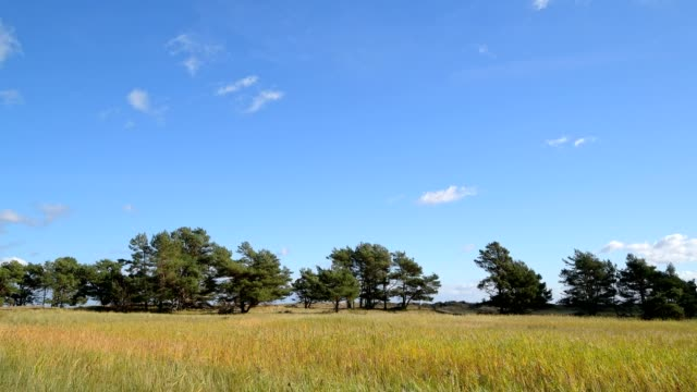 Dune landscape with blue sky, Darsser Ort, Prerow, Fischland-Darß-Zingst, Baltic sea, Mecklenburg-Vorpommern, Germany