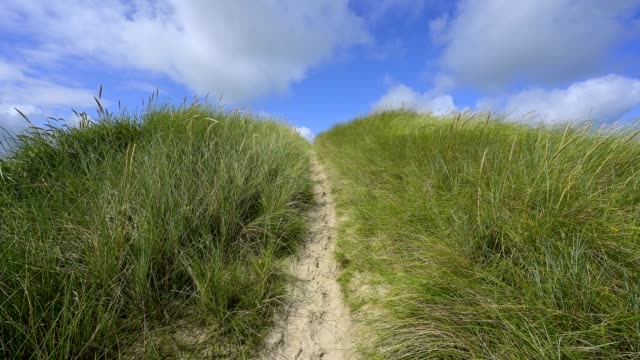dune landscape with sandy footpath to the sea in summer, bogsted rende, nationalpark thy, thisted, north sea, north jutland, denmark - sand dune stock videos & royalty-free footage
