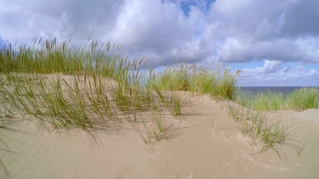 dune of sylt nature reserve / germany - marram grass stock videos & royalty-free footage