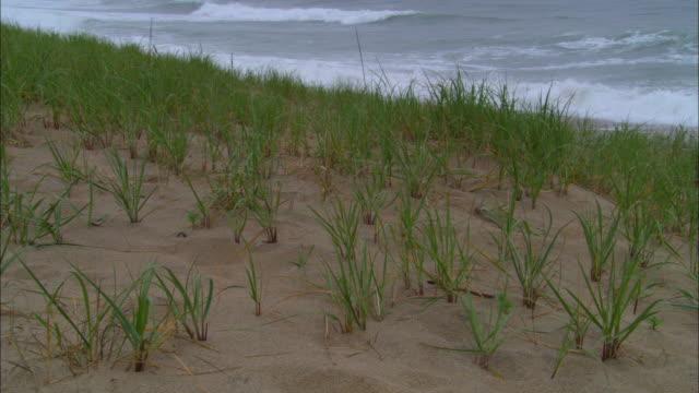 ms, dune with grass and ocean waves rolling into shore, eastham, massachusetts, usa - オオハマガヤ属点の映像素材/bロール