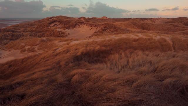vídeos y material grabado en eventos de stock de dunas de amrum, alemania - hierba familia de la hierba