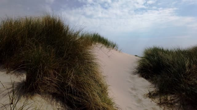 dunes on the island of sylt - dünen am strand in list auf sylt - tina terras michael walter stock videos & royalty-free footage