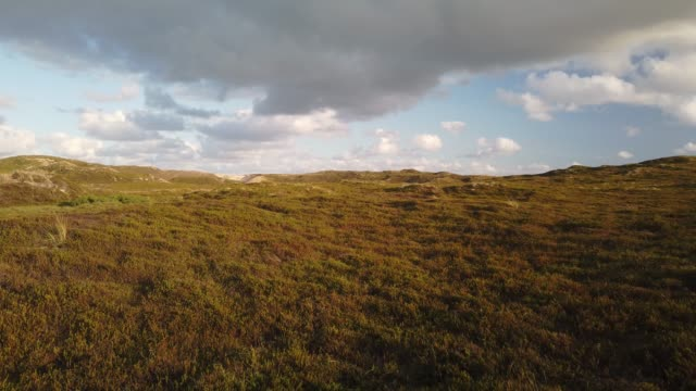 dunes on the island of sylt in the evening. heidelandschaft mit dünen auf sylt mit wolken - tina terras michael walter 個影片檔及 b 捲影像