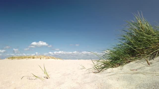 dunes on the north sea island sylt - dünen am strand von sylt - tina terras michael walter stock videos & royalty-free footage