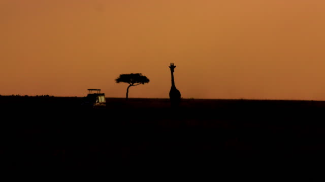 dusk after sunset with giraffe maasai mara  kenya  africa - 4x4 stock videos and b-roll footage
