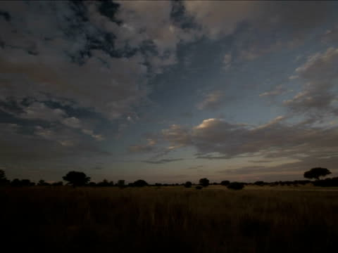 vídeos de stock e filmes b-roll de t/l dusk and cloud patterns over kalahari, south africa - planície