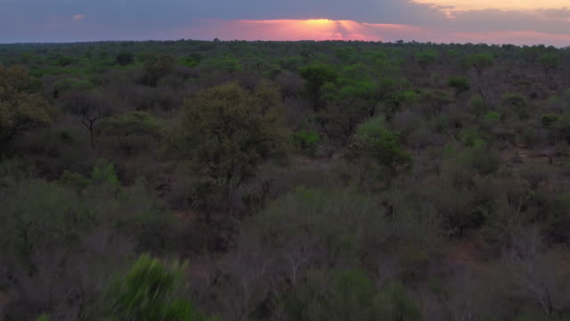 dusk over the kruger national park - wildlife reserve stock videos & royalty-free footage