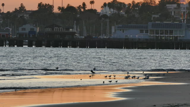4k dusk sandpipers and seagulls at the water's edge silhouetted against bright orange sand - sandpiper stock videos & royalty-free footage