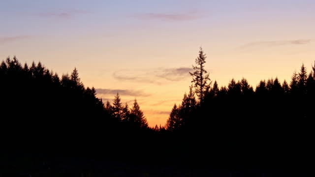 dusk sunset tree forest silhouette douglas fir from larch mountain in columbia gorge - portland oregon sunset stock videos & royalty-free footage
