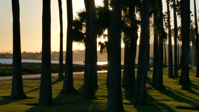 4k dusk the santa barbara coast looking between the trunks of large palm trees visible the ocean and a lifeguard hut - north pacific ocean stock videos & royalty-free footage