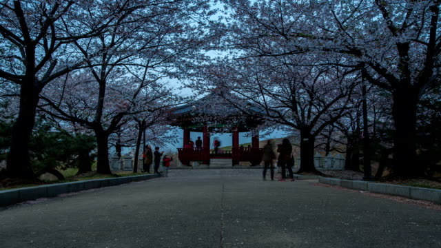 dusk to night view of a gazebo and cherry blossoms at olympic park in songpa-gu - gazebo stock videos and b-roll footage
