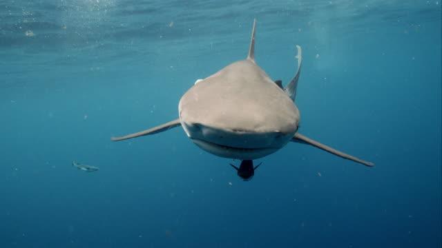 dusky shark up close - shark stock videos & royalty-free footage