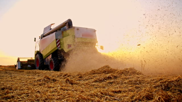 SLO MO Dust from the combine harvester cutting the wheat