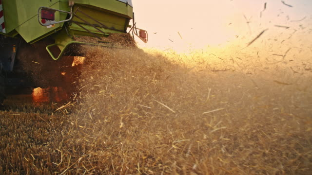 slo mo dust from the combine harvester cutting the wheat - combine harvester stock videos & royalty-free footage