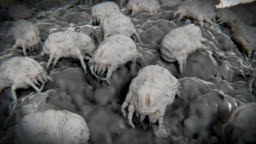 Dust mites on a dust mote.