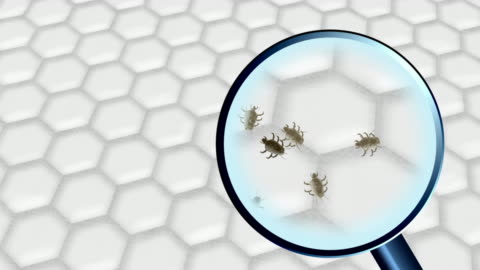 dust mites - unhygienic stock videos & royalty-free footage