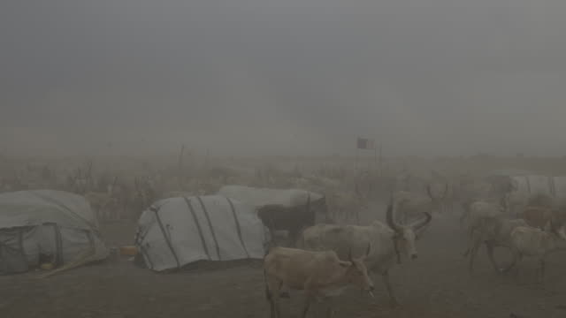 dust storm covering dinka cattle camp and herd of cattle / sudd swamps, south sudan, africa - tent stock videos & royalty-free footage